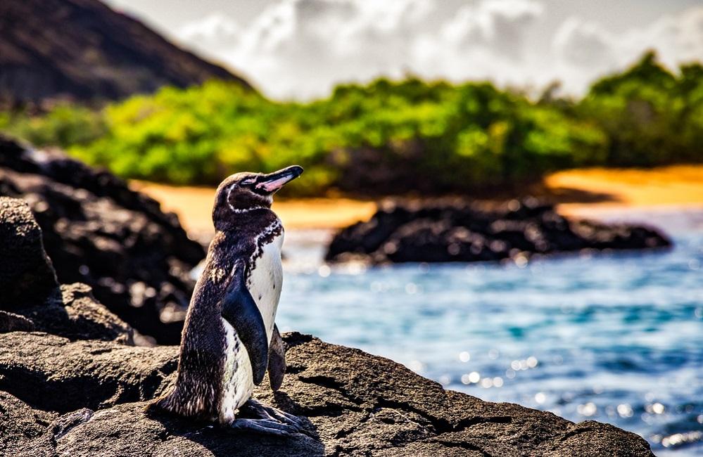 Galapagos Adaları